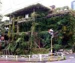120906_Midoriso-TokioS