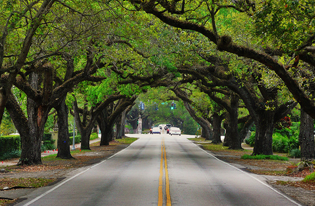 100321_CoralWay_Trees
