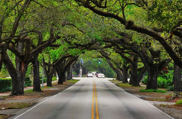 100321_CoralWay_Trees